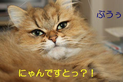 ぶーたれ顔.jpg