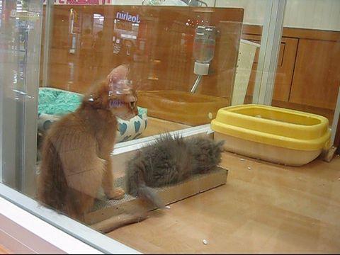 子猫たち.jpg