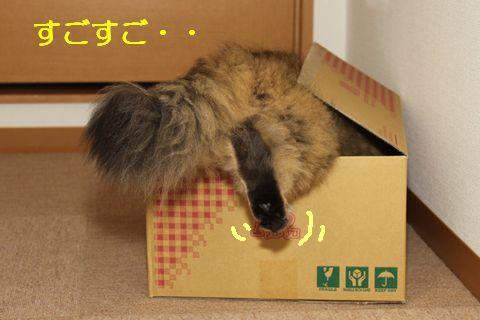 箱にin.jpg