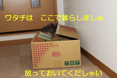 箱暮らし.jpg