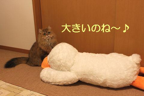 IMG_00324q.jpg
