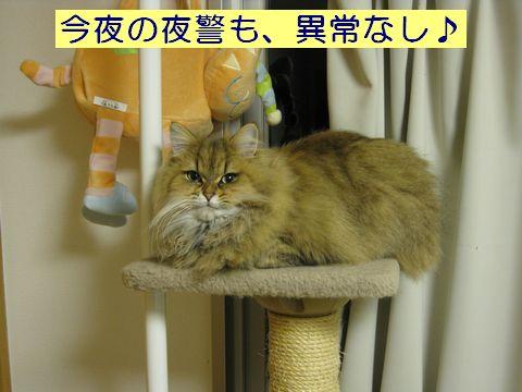IMG_0062c.jpg