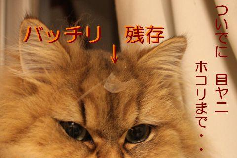 IMG_01041q.jpg