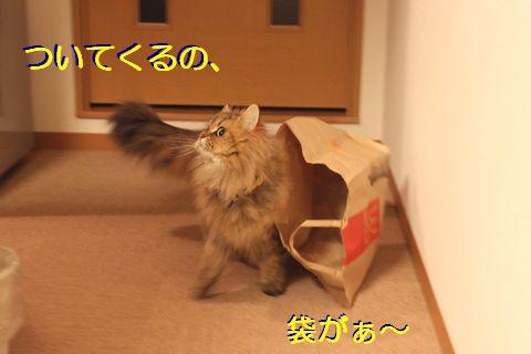 IMG_01063q.jpg