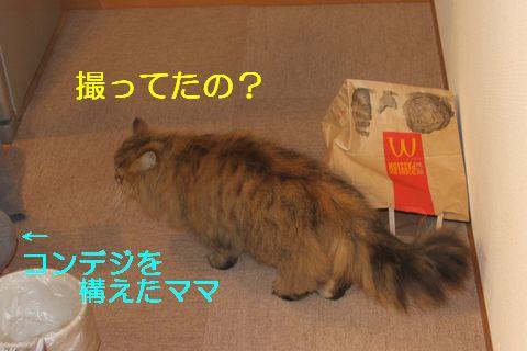 IMG_01073q.jpg