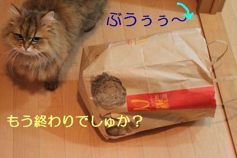 IMG_01436q.jpg