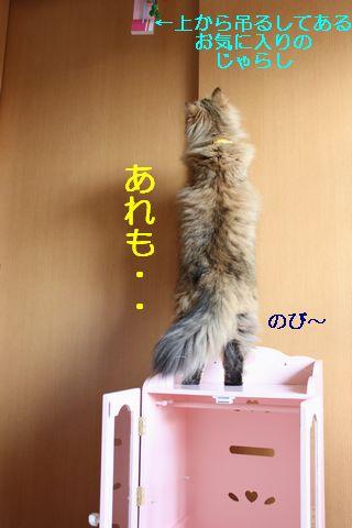 IMG_01544q.jpg