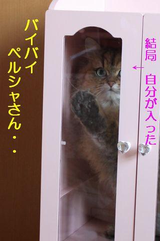 IMG_01558q.jpg