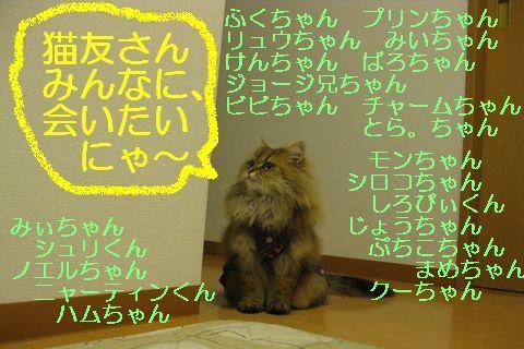 IMG_0338d.jpg