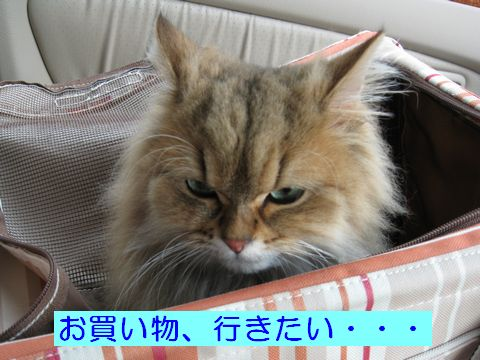 IMG_0708b.jpg