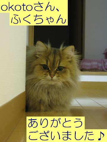 IMG_0730c.jpg