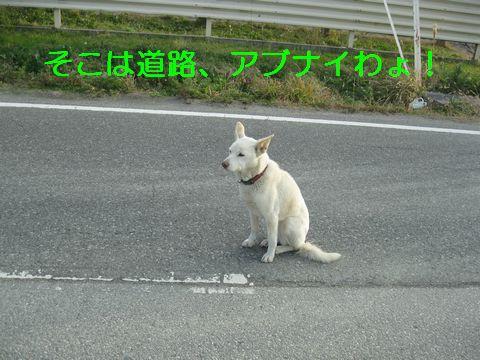 IMG_0741b.jpg