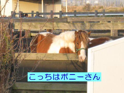 IMG_0763c.jpg