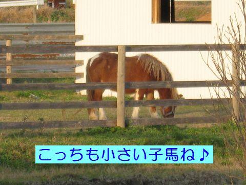 IMG_0767c.jpg