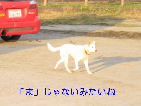 IMG_0768b.jpg
