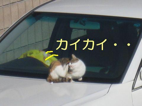 IMG_0930d.jpg