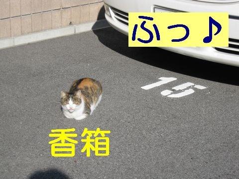 IMG_0937d.jpg