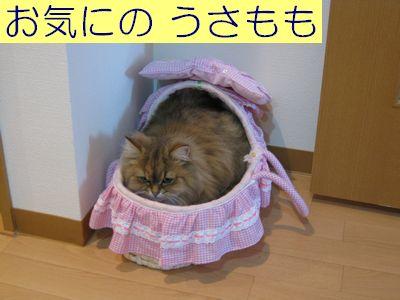 IMG_0963f.jpg