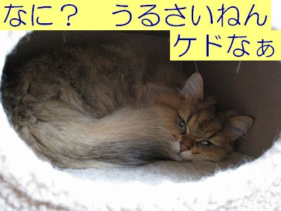 IMG_1129f.jpg
