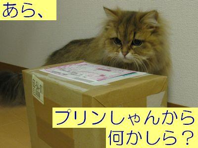 IMG_1177f.jpg