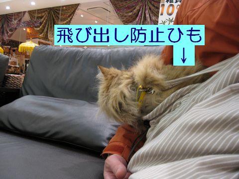 IMG_1409c.jpg