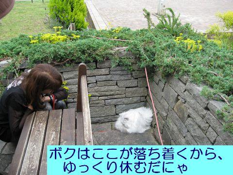 IMG_1422q.jpg