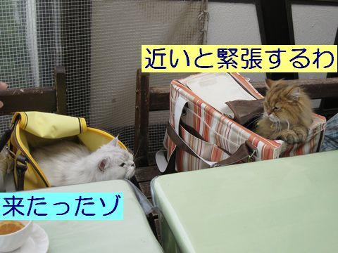 IMG_1441q.jpg