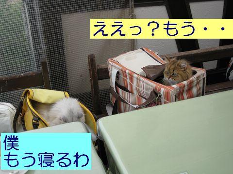 IMG_1448q.jpg