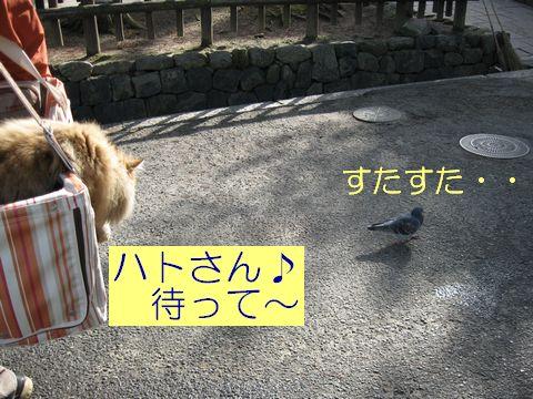 IMG_1490f.jpg