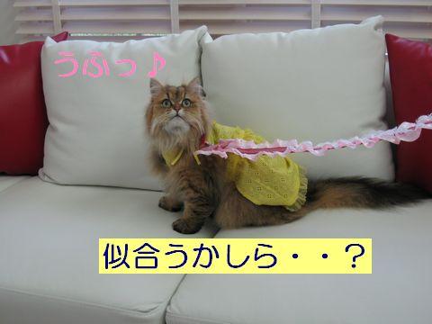 IMG_1502q.jpg