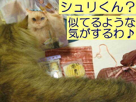 IMG_1581q.jpg
