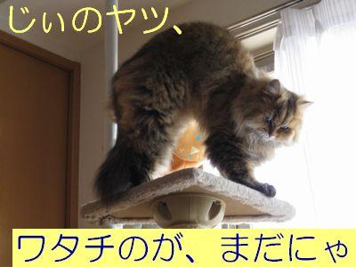IMG_2179f.jpg