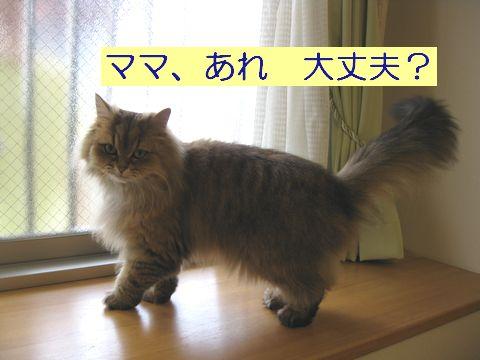 IMG_2237q.jpg