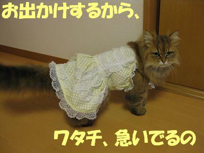 IMG_2285f.jpg