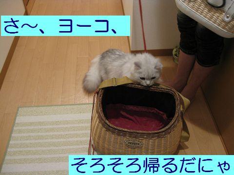 IMG_2331q.jpg