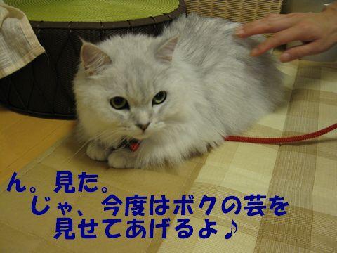 IMG_2363q.jpg