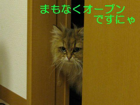 IMG_3054q.jpg