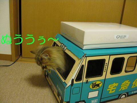 IMG_3107q.jpg