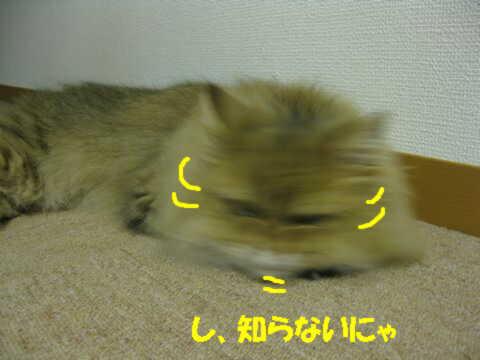 IMG_3336q.jpg