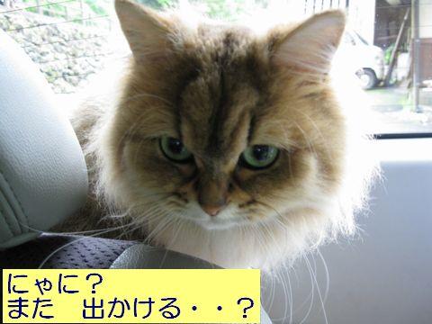 IMG_4271q.jpg