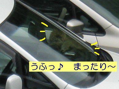 IMG_4308w.jpg