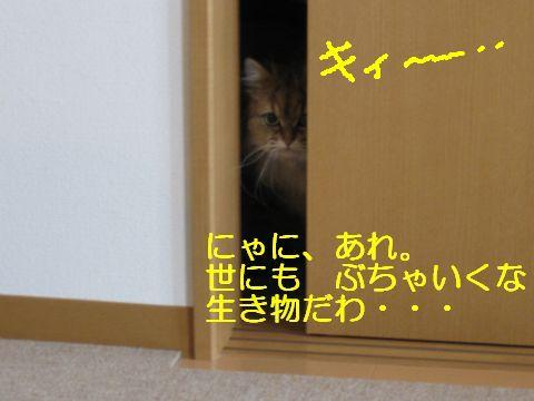 IMG_5788q.jpg