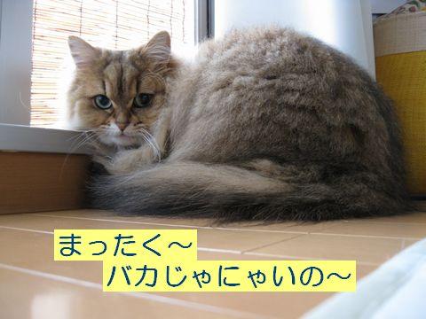 IMG_5988q.jpg