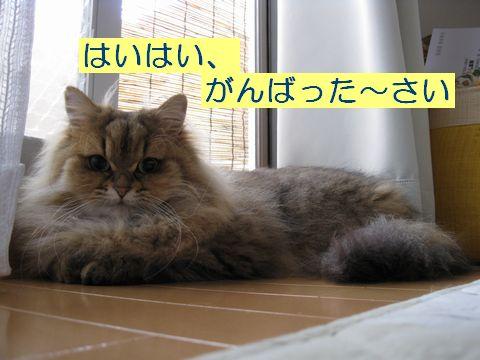 IMG_5992q.jpg