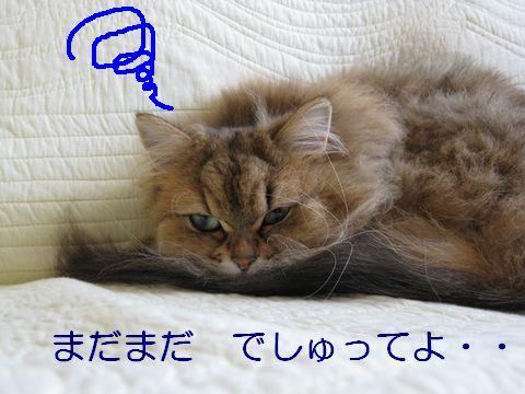 IMG_6552q.jpg