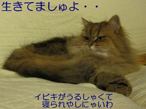 IMG_8564q.jpg