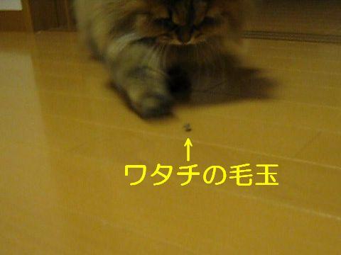MVI_0883c.jpg
