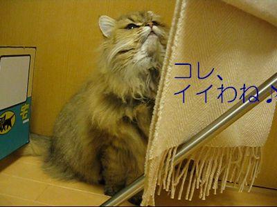 MVI_0932g.jpg