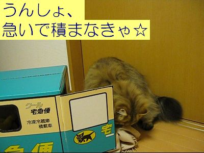 MVI_0932h.jpg