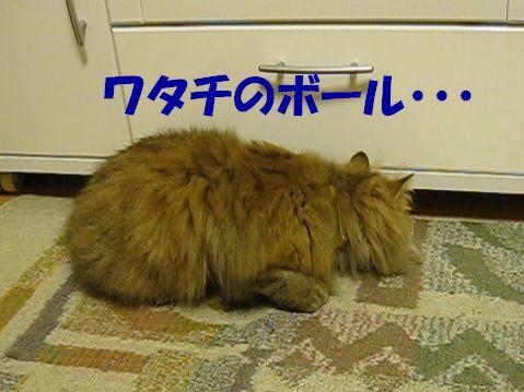 MVI_1159q.jpg